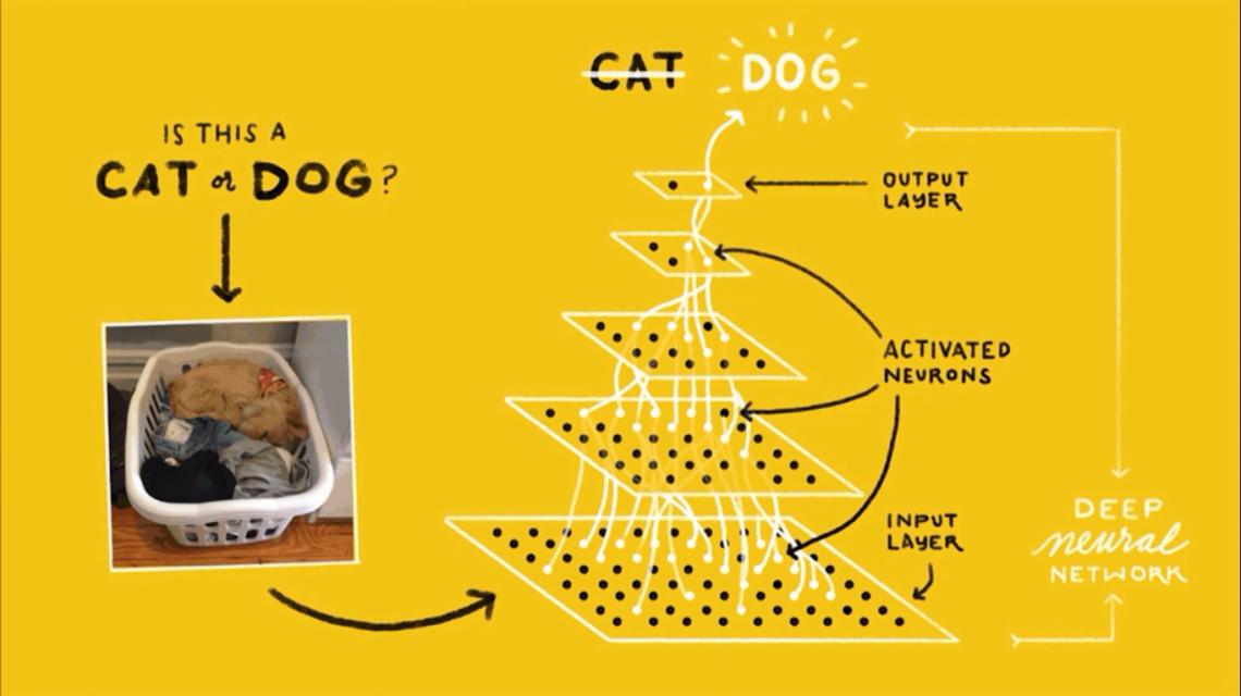 cat-or-dog